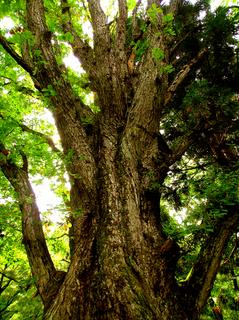 54鴫の谷地沼大樹s.jpg
