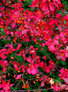 69鴫の谷地沼赤い花s.jpg